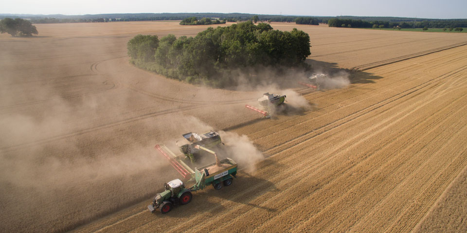 Mähdrescher Claas Lexion in Formation